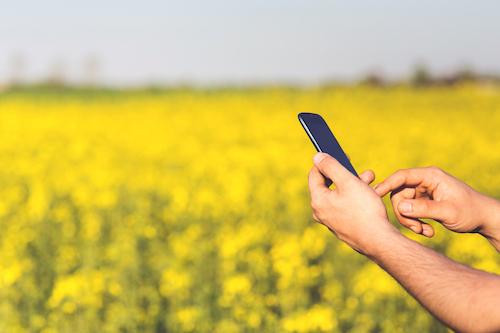 Schmuckbild für Online-Coaching mit Blick auf ein Mobiltelefon im Freien